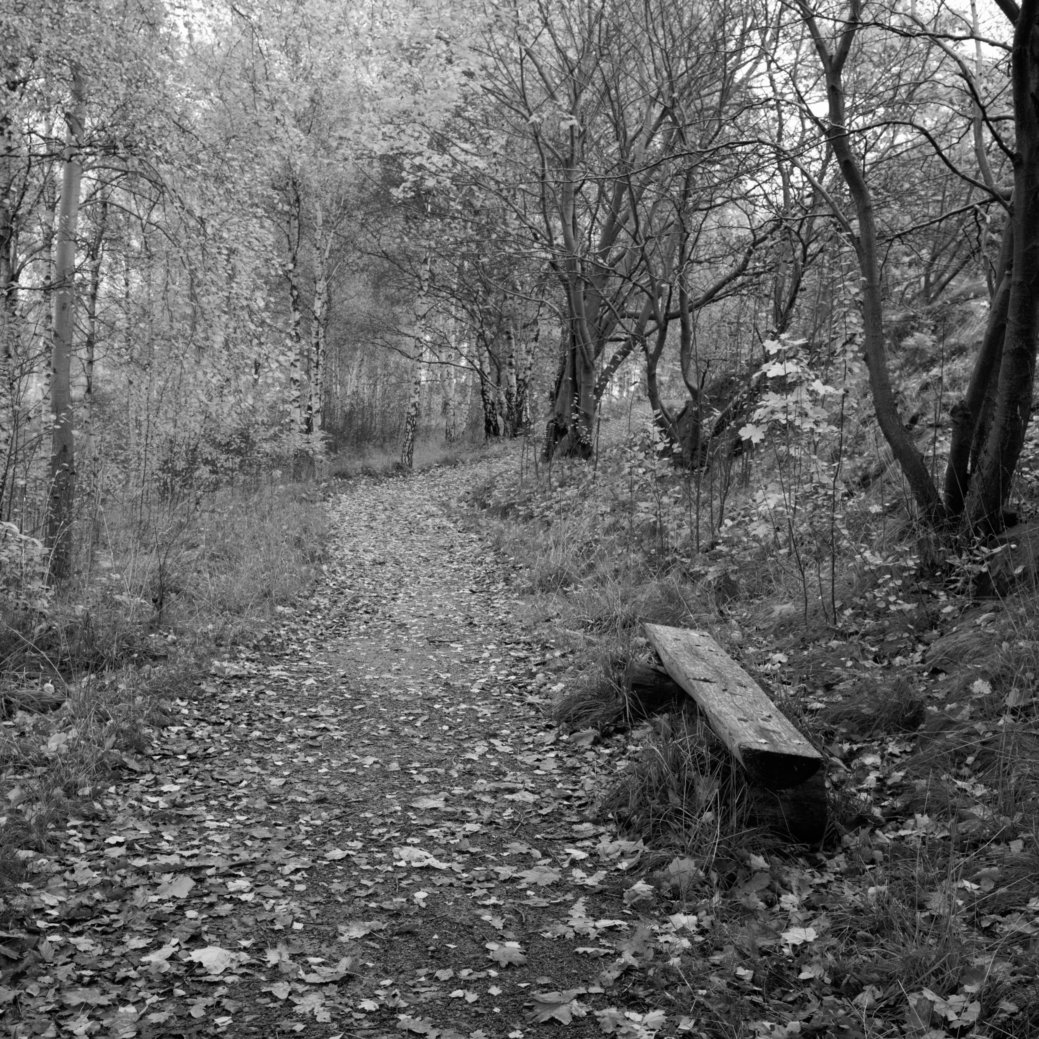 Fall in black and white at Sörhallsberget (Gothenburg, Sweden) with Leica M Monochrom (Leica Summilux-M 35mm f/1.4 ASPH.) by Magnus L Andersson (photography.anderssoneklund.se) at 2012-10-21 09:48:35