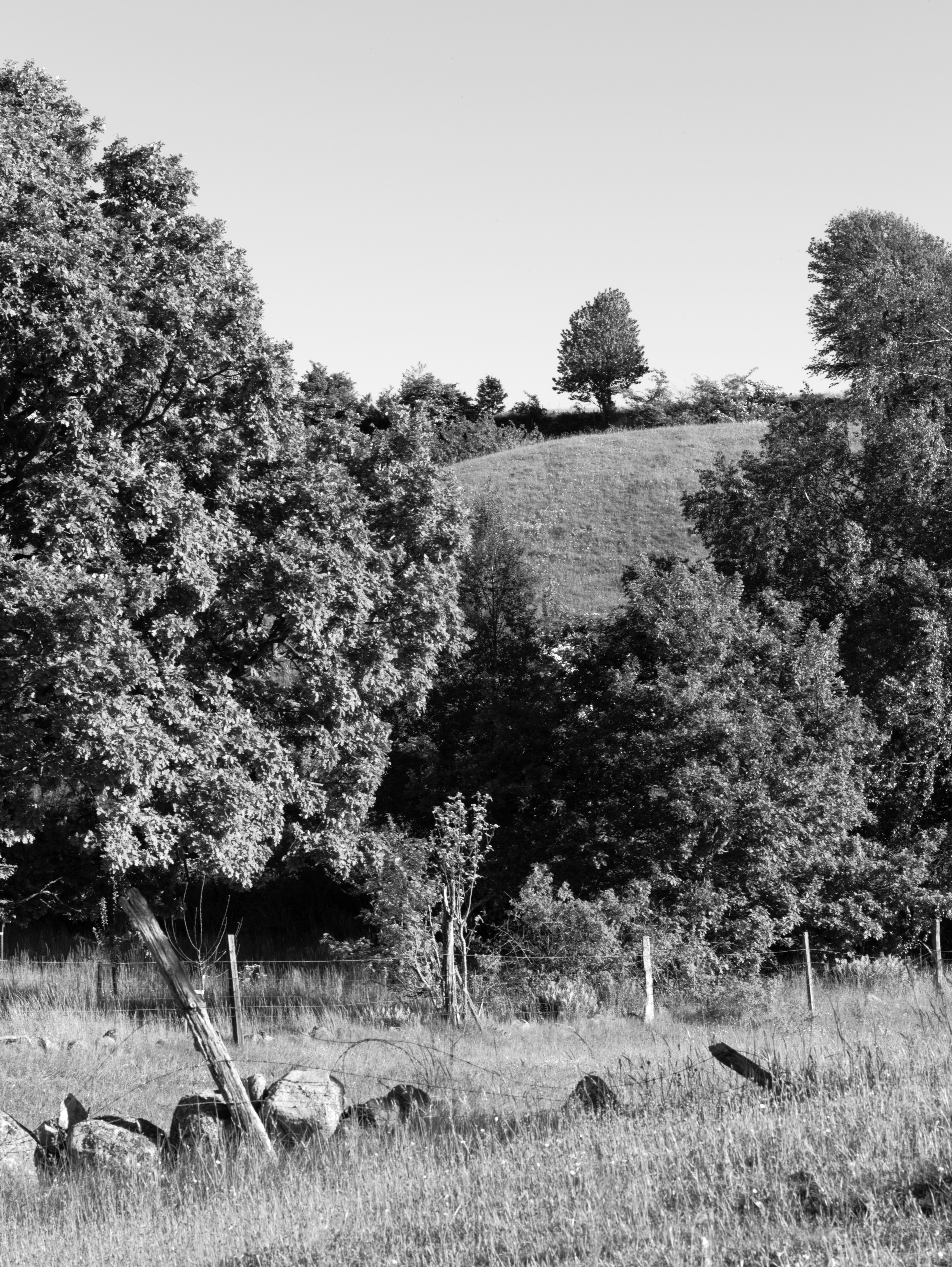 A tree on the hill at Brösarps backar (Brösarp, Sweden) with Leica M Monochrom (Leica Macro-Elmar-M 90mm f/4) by Magnus L Andersson (photography.anderssoneklund.se) at 2013-06-06 18:01:44