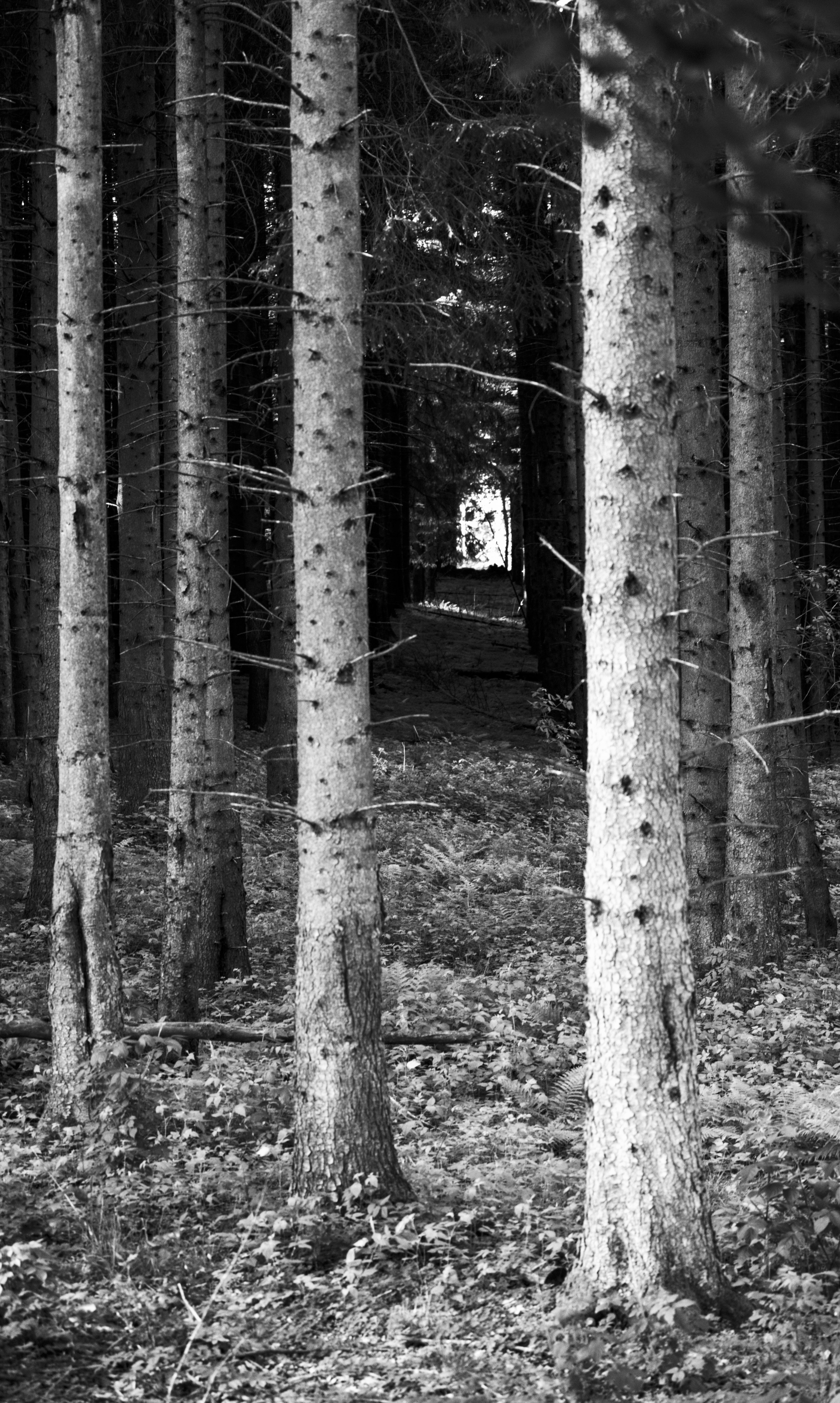 Trees at Christinehof at Christinehof (Brösarp, Sweden) with Leica M Monochrom (Leica Macro-Elmar-M 90mm f/4) by Magnus L Andersson (photography.anderssoneklund.se) at 2013-06-08 19:04:10
